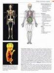 Анатомический атлас. Функциональные системы человека.  Лютьен-Дреколль Э., Рохен Й.